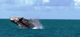 Turismo em Caravelas na Bahia