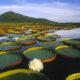 Turismo em Portugal  As melhores pousadas do Pantanal
